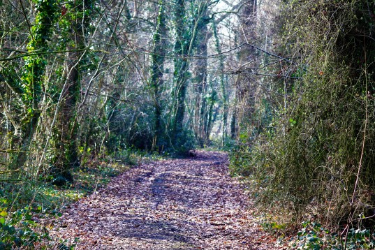 Fantastic walks